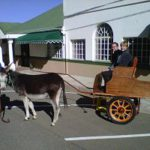 harrismith_activities-donkey-cart